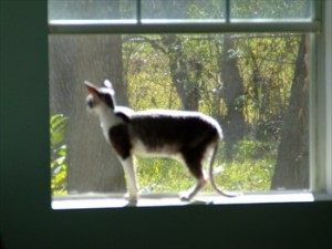 Barf Kitty in the window
